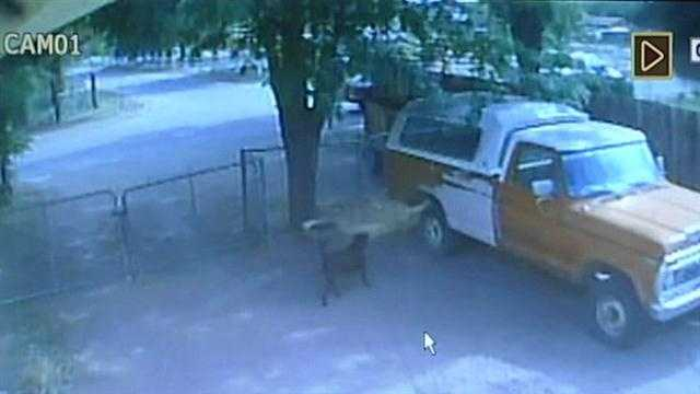 Video showing a woman dropping something for a dog that becomes violently ill a short time later led to an arrest recently.