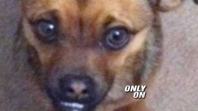 A dog was shot death in his own backyard.
