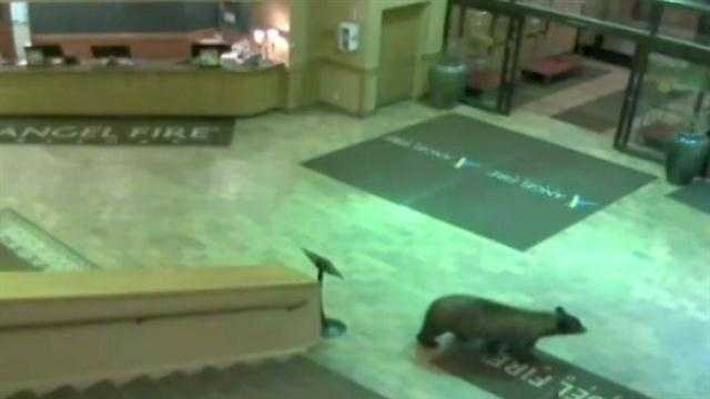 Bear roams ski resort lobby