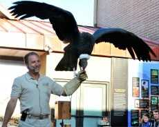 Daily: Birdman of Las Vegas at the Youth Hall Courtyard at 10:30 a.m., 12:30 p.m., 3 p.m. and 5:30 p.m.