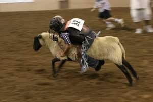 Friday, September 14: International Indian Final Rodeo begins at Tingley Coliseum, 7 p.m.