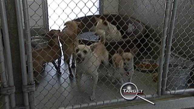 Inspector General probes animal welfare department