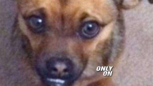 Dog death felony