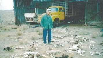 Local farmer with sheep slaughtered by Coyotes