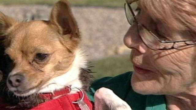 Dog gets smallest prosthetic