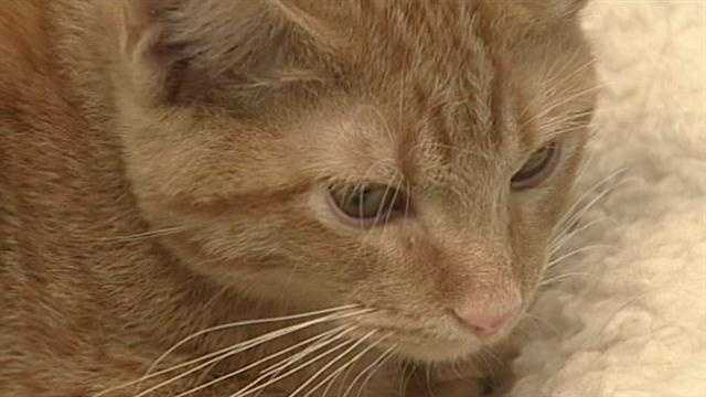Euthanasia rates have dropped dramatically this year at animal welfare. At the same time adoptions are up! Will Carr explains why, and also what you can do to help save an animal's life.