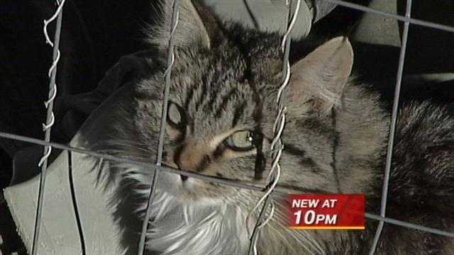 Lisa Thurston has tried for months to alert authorities to her neighbor's cat problem.