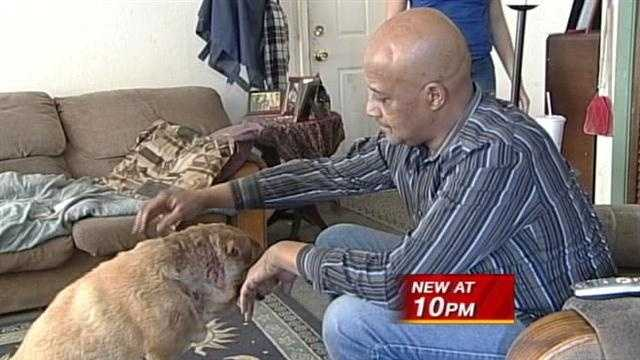 The owner of a dog attacked by pit bulls, talks to action seven news tonight. He's still very angry but thankful his dog is alive.