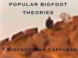 7. Bigfoot was captured by the government in 1999