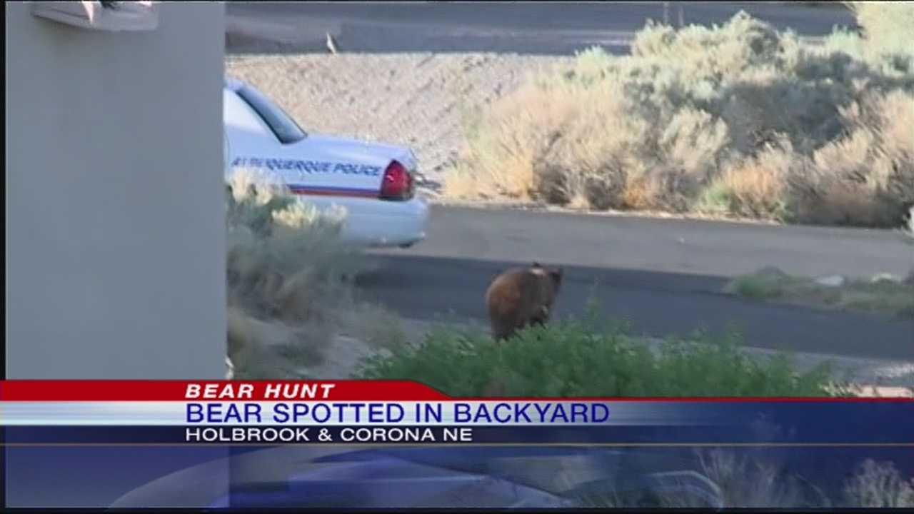 Bear spotted in Albuquerque backyard