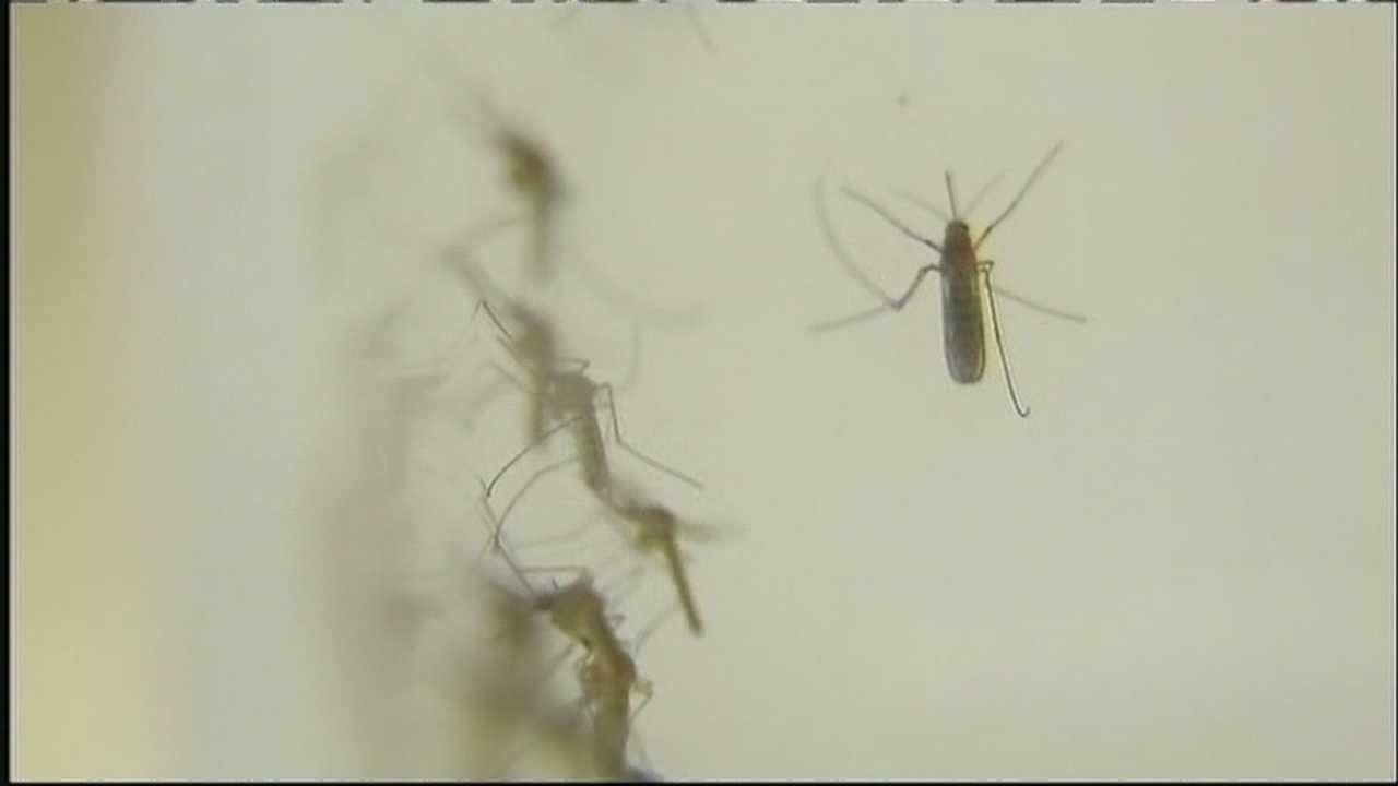 West Nile risks with standing water