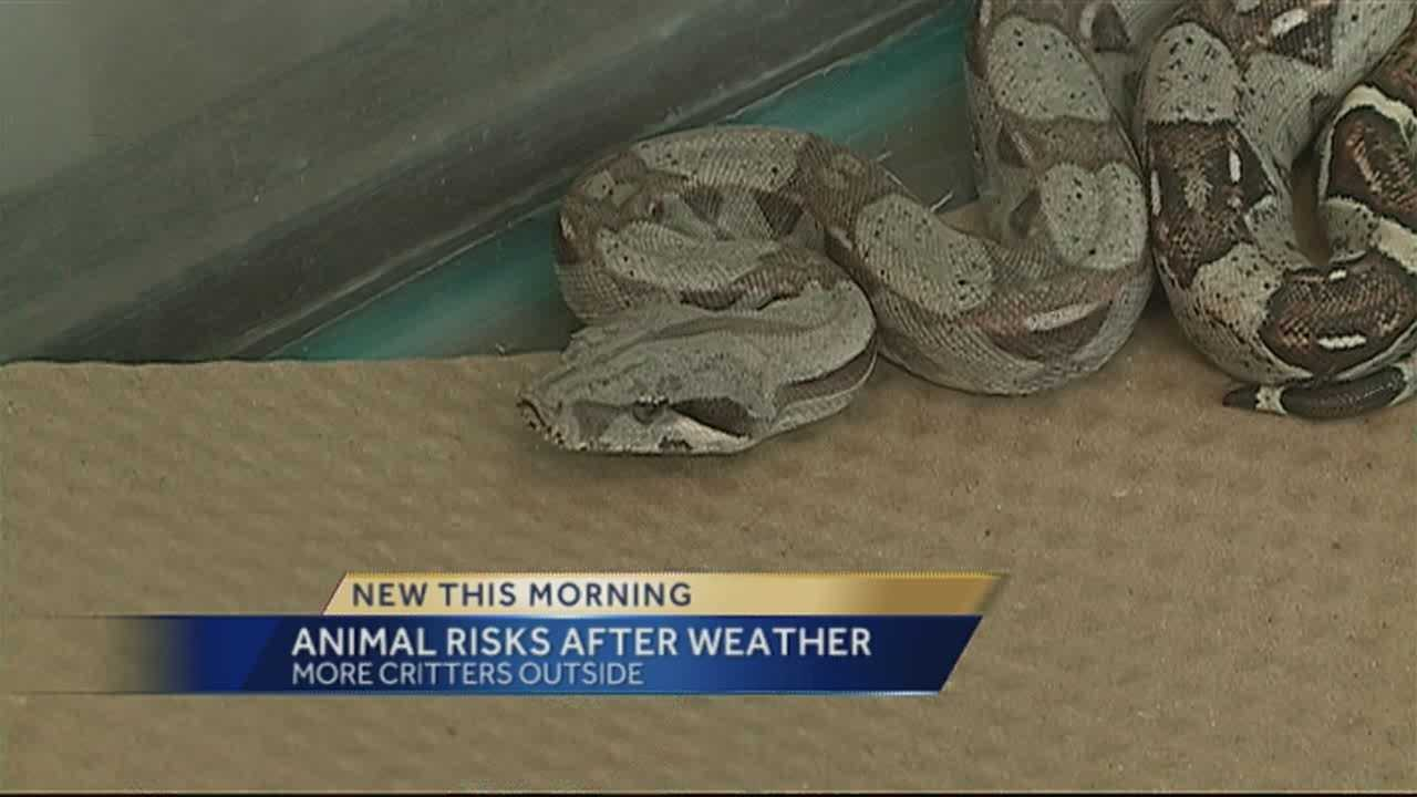 Game and Fish says you can expect to see more insects, rodents and even snakes following last weeks wet weather.