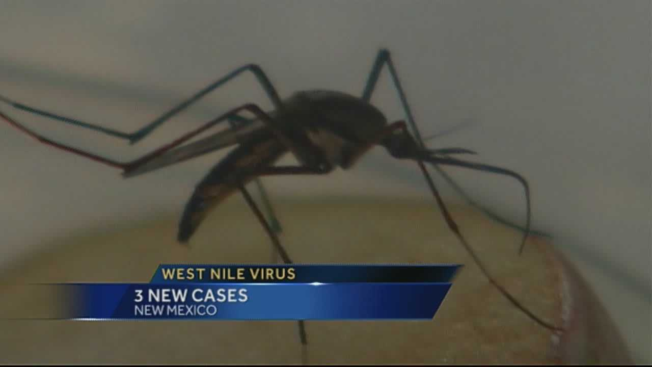 img-Recent rains increase West Nile risk