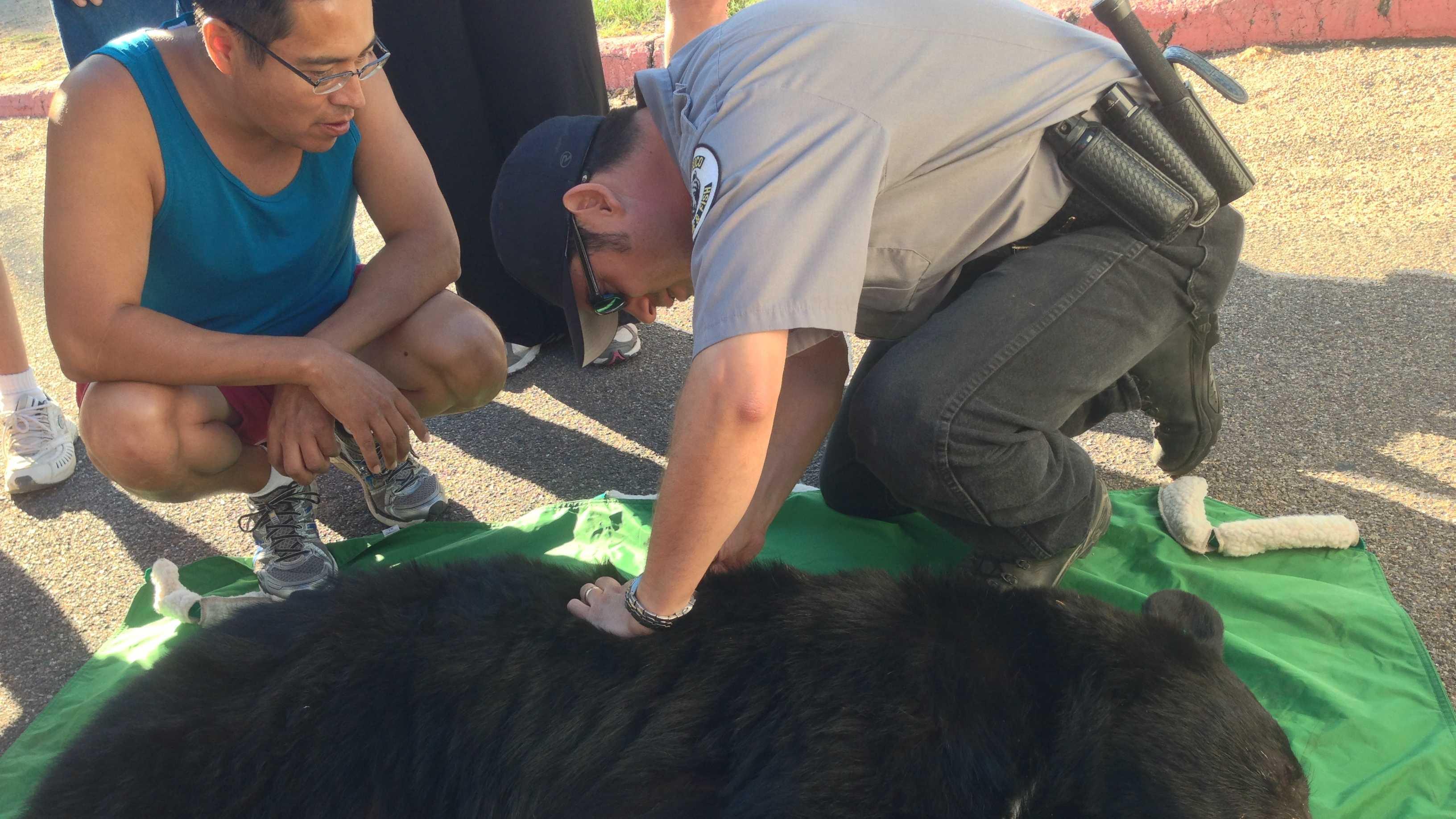 Bear captured Sept. 20, 2013