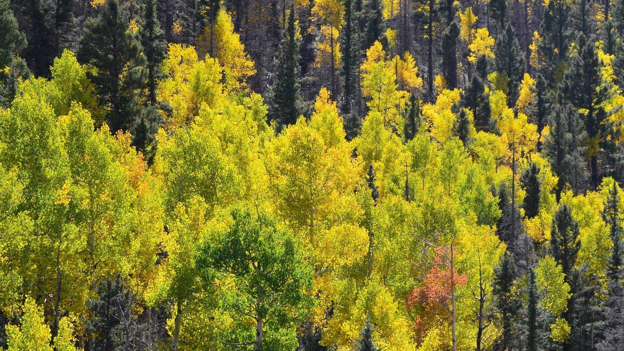 autumn generic
