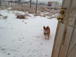 Daisy in the snow in Manzano, N.M.