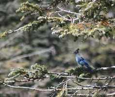 But a few of you took a different approach, and the photos turned out great. [Blue Jay]