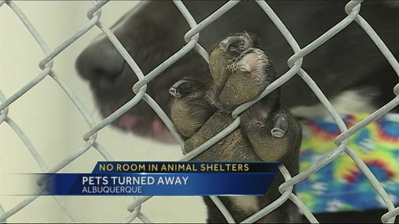 There's no room at Albuquerque animal shelters.  For the first time ever cats and dogs are being turned away.