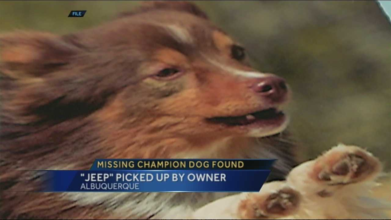The woman who lost her champion agility dog on New Year's Eve has been reunited with the prized pup.