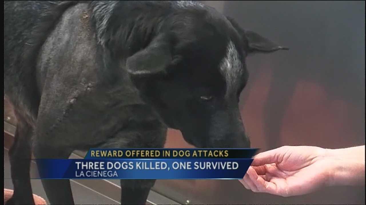 Reward For Capture Of Dog Shooter