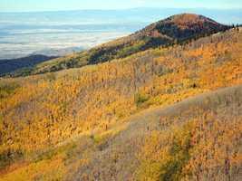 Aspen VistaSangre de Cristo Mountains, New Mexico.