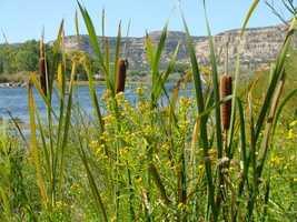 San Juan River, below the dam (NW NM)