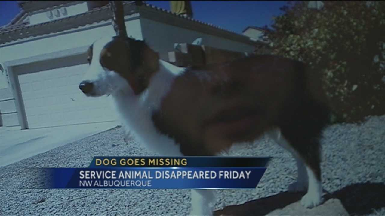 Tonight a disabled veteran is looking for his service dog.
