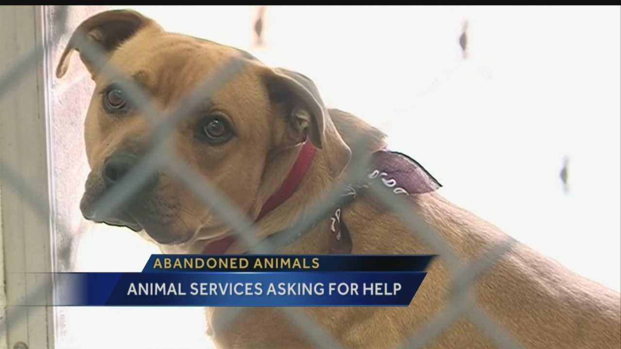 Abandoned Animals in Albuquerque