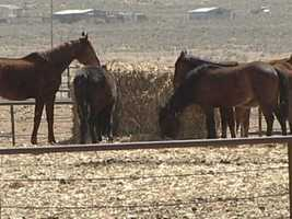 Oct. 8, 2013: Navajo Nation members agree to end horse roundups for slaughter