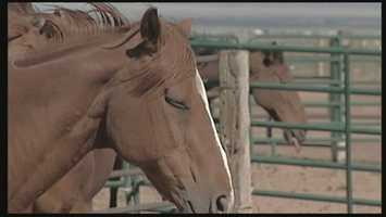 March 3, 2014: NM Supreme Court refuses to bar a District Court judge from handling a lawsuit against proposed horse slaughterhouse in Roswell.