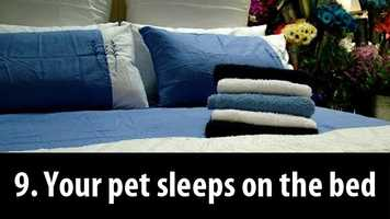 9. You let your pet sleep on the bed: One Mayo Clinic study revealed that more than half of pet owners had bad sleep every night they shared their bed with their furry friend.