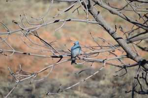 Avid birder? Were you thinking about trying it that one time? Either way, here are 12 locations NewMexico.org suggests you check out.