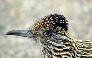 Rattle Snake Springs (Carlsbad Caverns): Look for a list of recently seen birds at the Caverns Visitor Center
