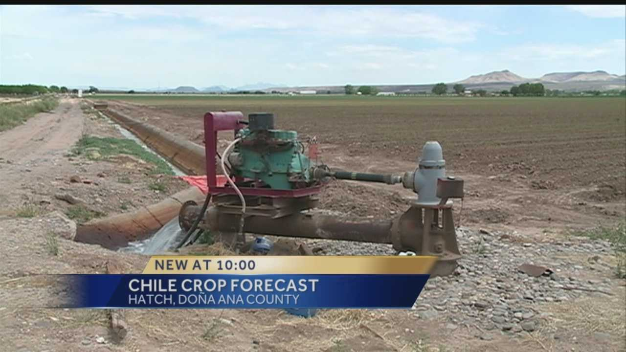 RIGHT NOW, NEW MEXICO FARMERS ARE WORKING ON THIS YEAR'S CROP OF RED AND GREEN CHILE.