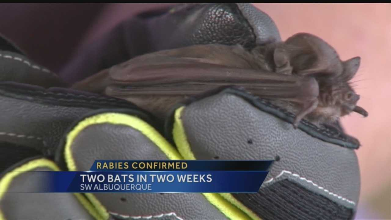 Two bats found in the South Valley have tested positive for rabies, health officials confirmed Wednesday.