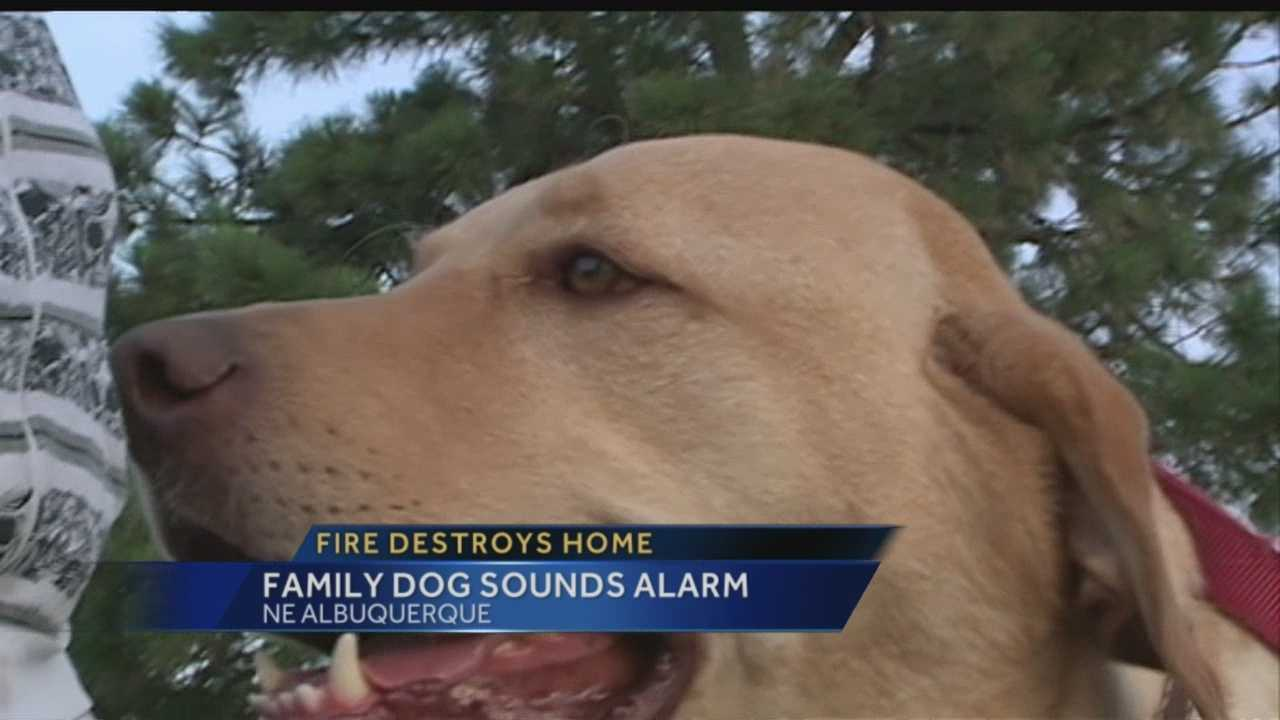 Pet oxygen masks: Saving animal lives