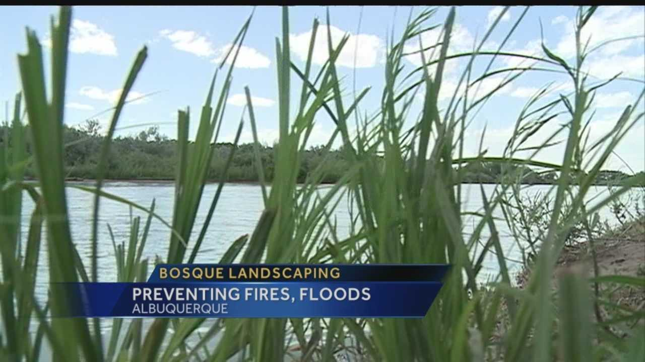 Big changes are coming to the Bosque. Action 7 News reporter Megan Cruz tells us about a landscaping project that will make us all more safe.
