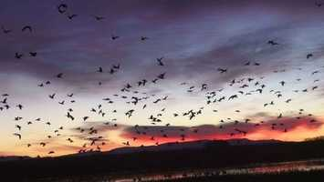 25.       Go to the Bosque del Apache National Wildlife Refuge and see a bird