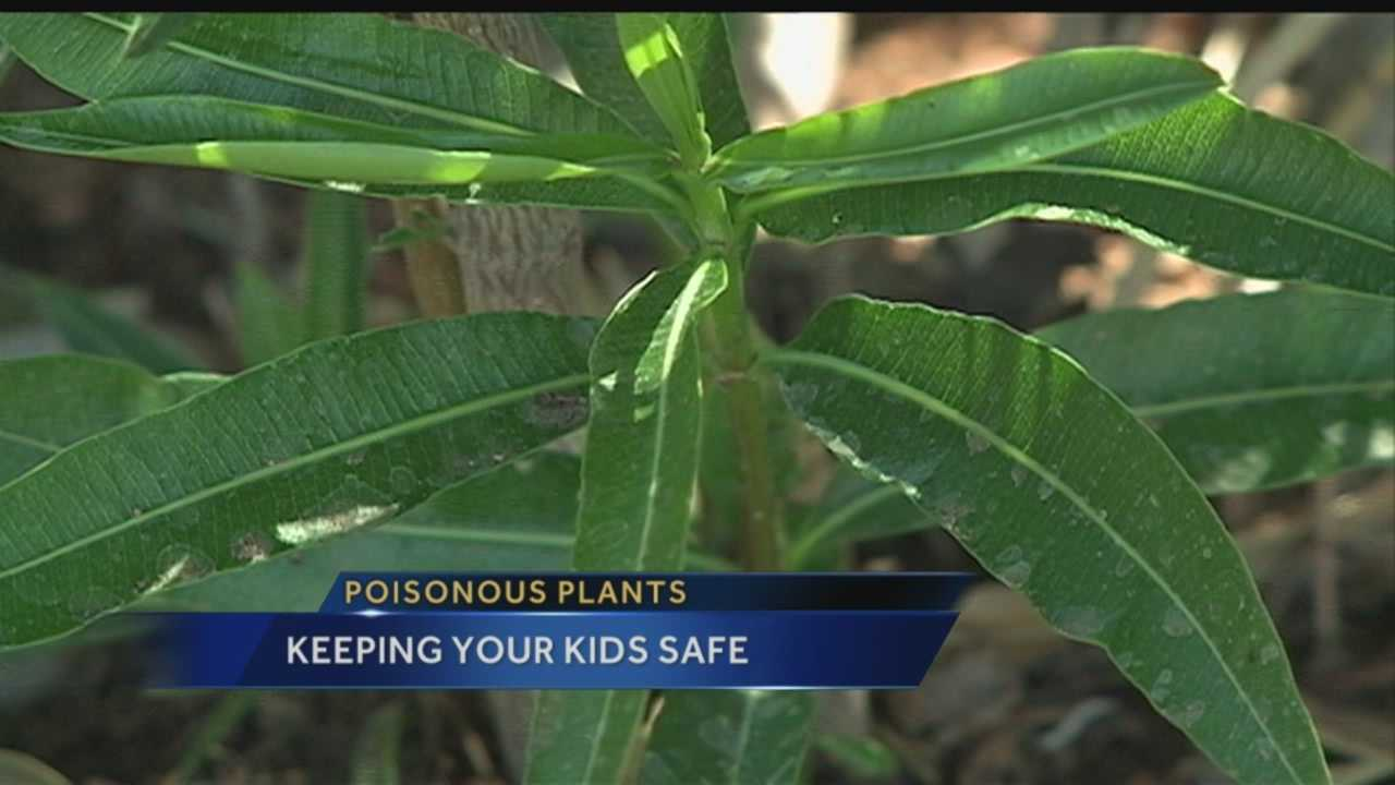 Getting outdoors is a great way to be healthy, but there are hidden dangers in the form of poisonous plants -- maybe even in the city's back yards.