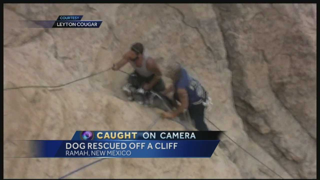 Caught on camera: Dog rescued off NM cliff