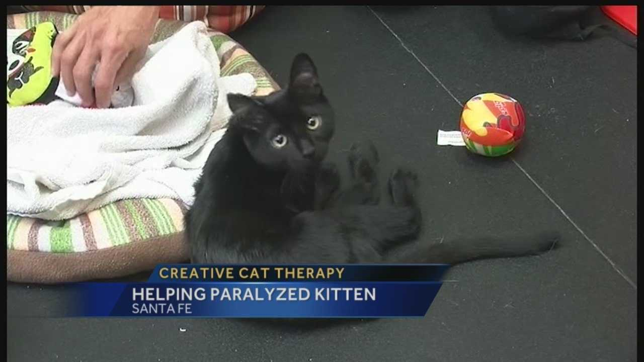 Creative cat therapy: Helping paralyzed kitten