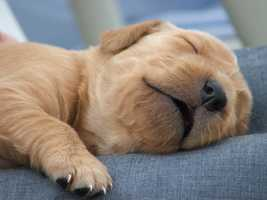 1. Naps boost your energy level
