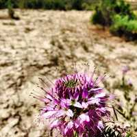 17. Choose the right plants for a desert environment