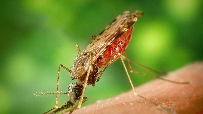 west nile mosquito bernalillo