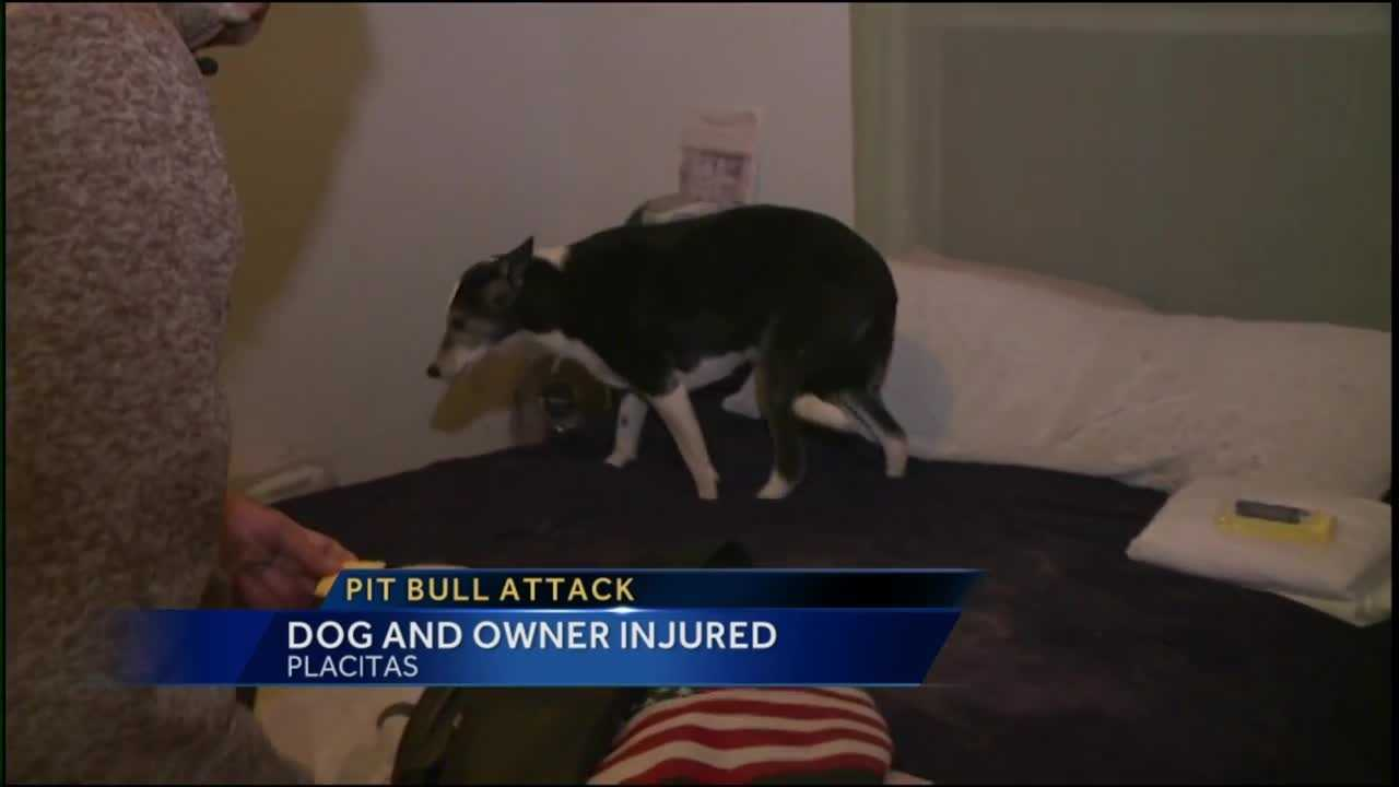 A man and his dog are still recovering after they were attacked by a neighbor's dog.