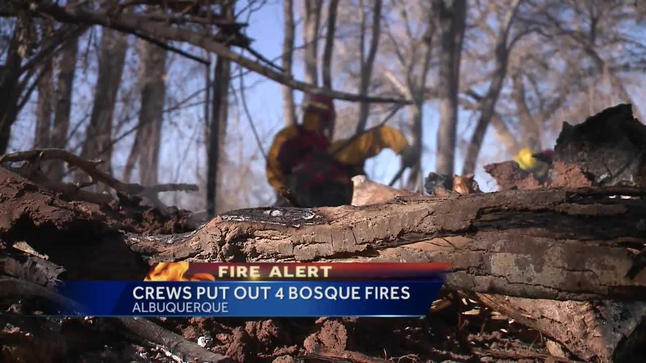 Four fires in the Rio Grande bosque are now being investigated by the Albuquerque Fire Department.