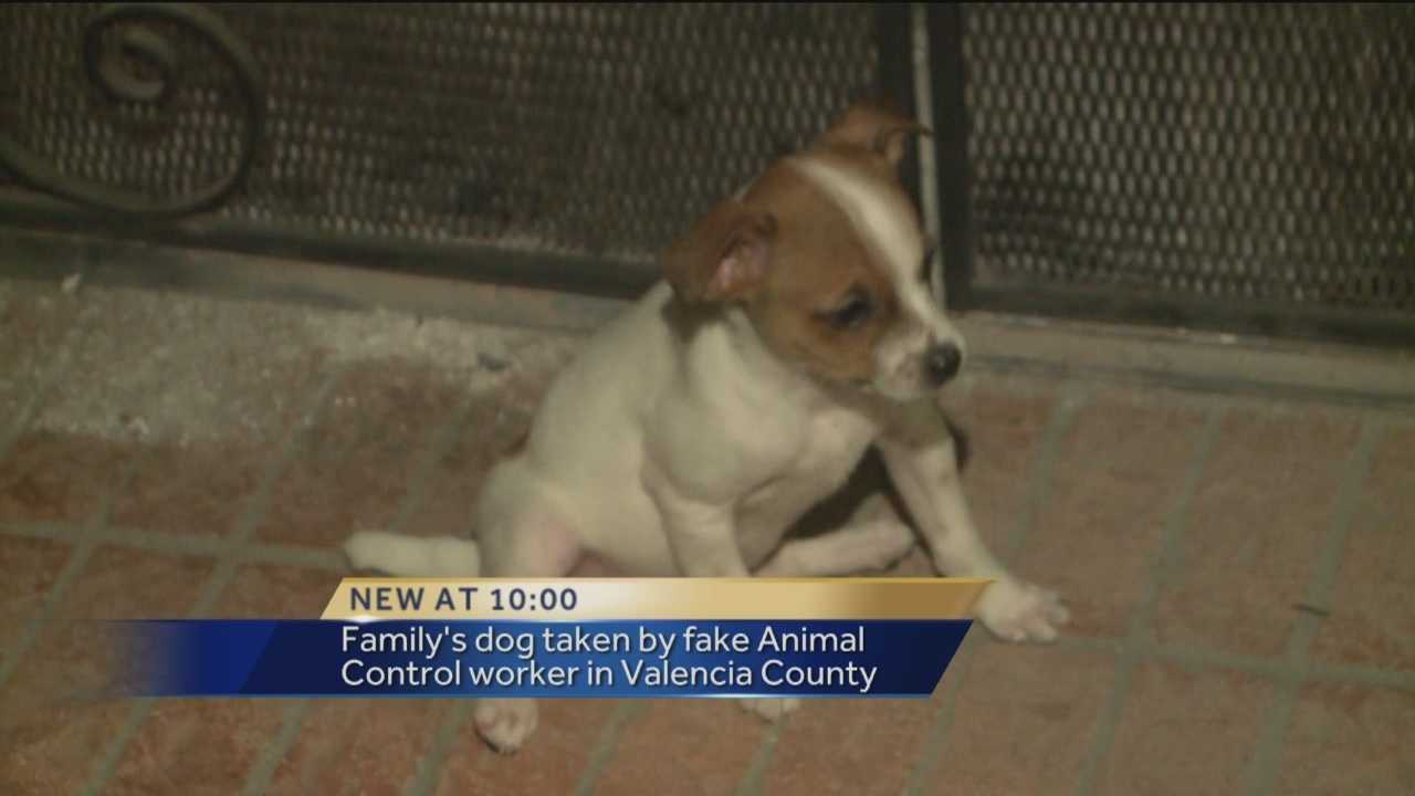 Dog theft: Faux letters list animal abuse charges