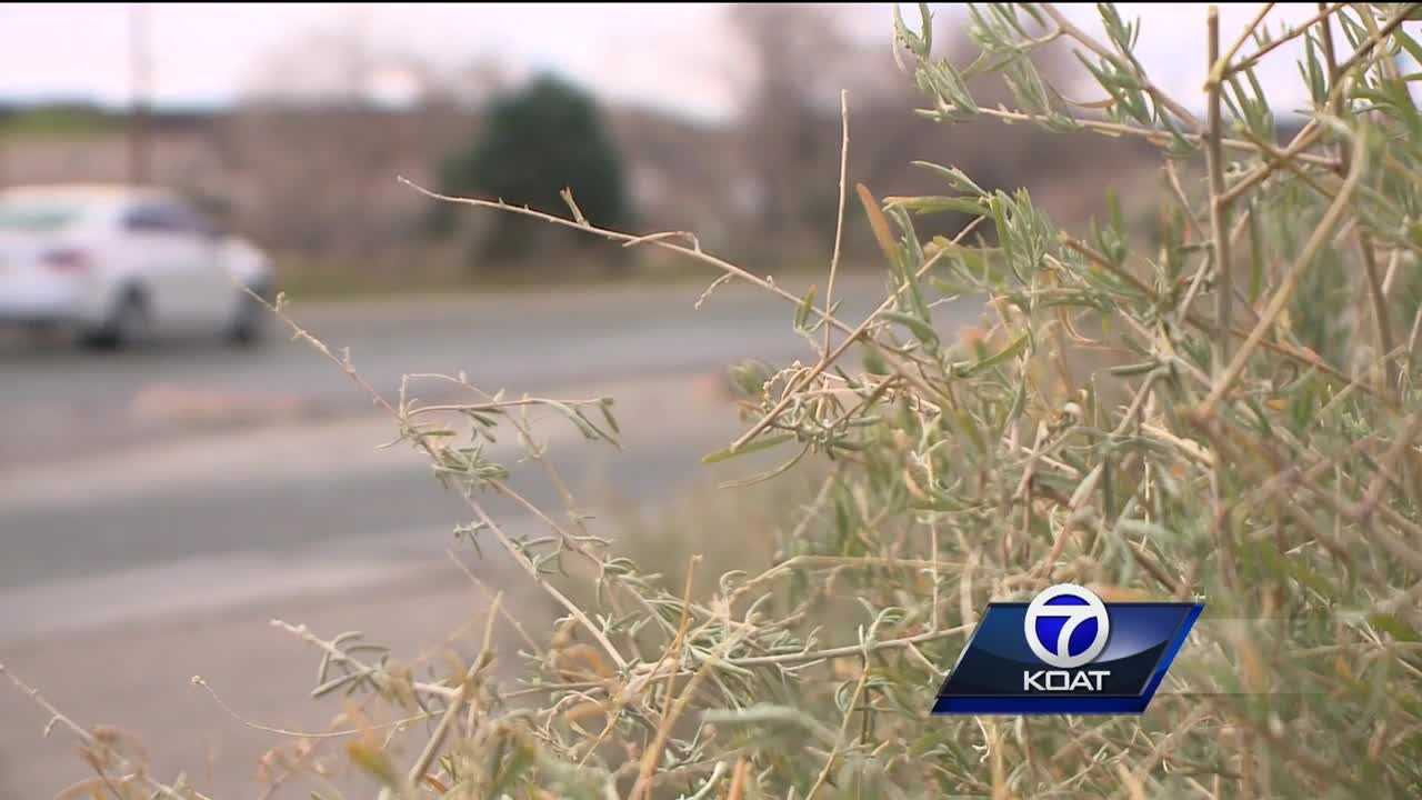 Neighbors, city battle it out over brush