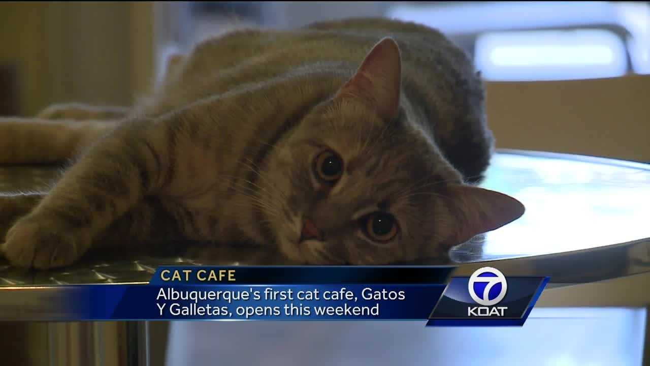 Cat cafe to open this weekend