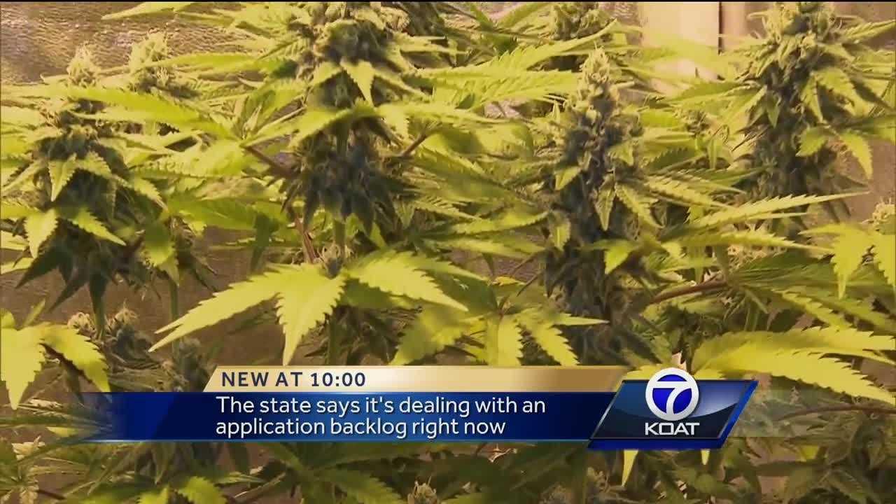 Medical cannabis backlog